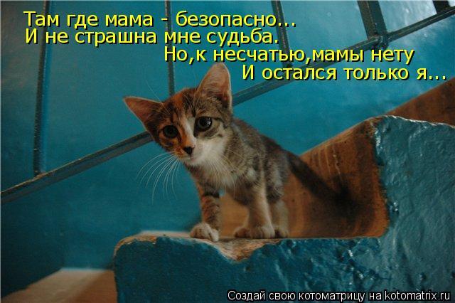 Котоматрица: Там где мама - безопасно... И не страшна мне судьба. Но,к несчатью,мамы нету И остался только я...