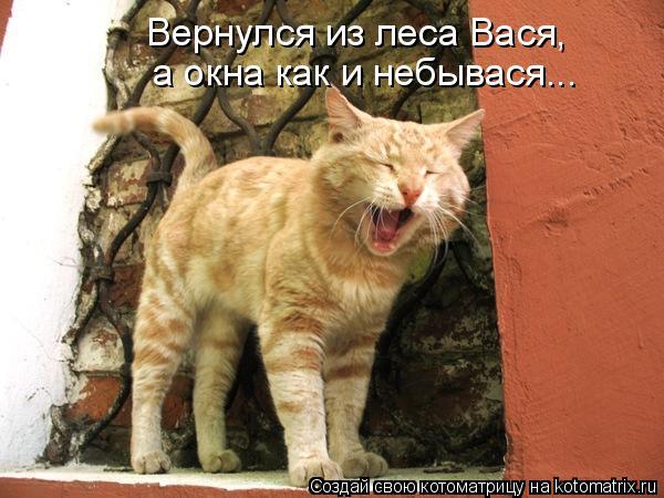 Котоматрица: Вернулся из леса Вася, а окна как и небывася...