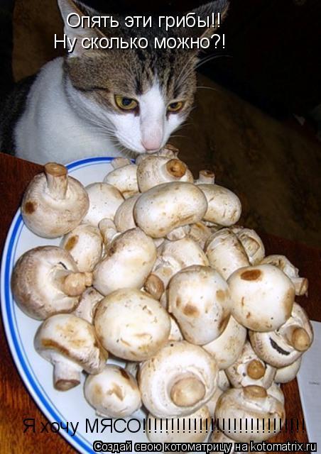 Котоматрица: Опять эти грибы!! Ну сколько можно?! Я хочу МЯСО!!!!!!!!!!!!!!!!!!!!!!!!!!!!!