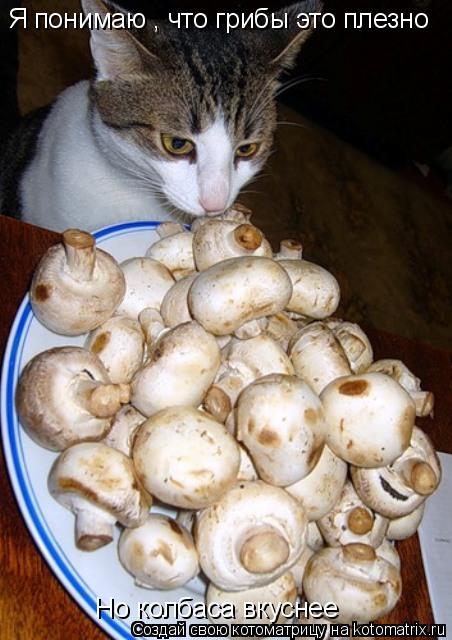 Котоматрица: Я понимаю , что грибы это плезно Но колбаса вкуснее