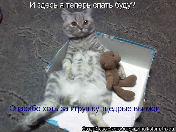 Котоматрица: И здесь я теперь спать буду?   Спасибо хоть за игрушку, щедрые вы мои