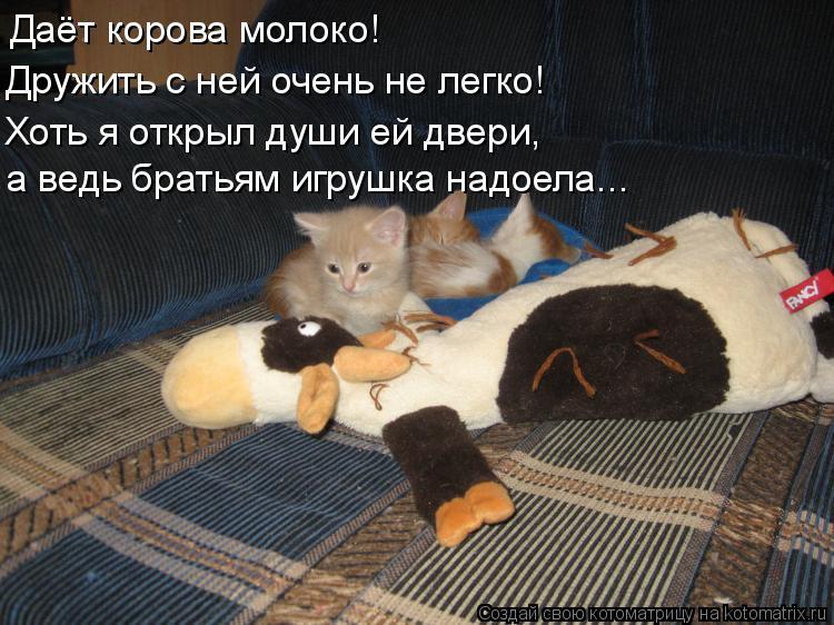 Котоматрица: Даёт корова молоко! Дружить с ней очень не легко! Хоть я открыл души ей двери, а ведь братьям игрушка надоела...