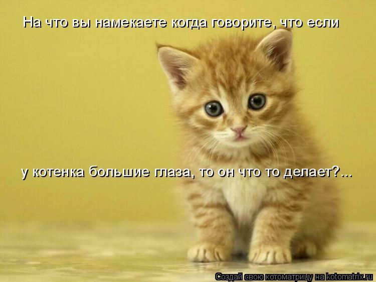Котоматрица: На что вы намекаете когда говорите, что если  у котенка большие глаза, то он что то делает?...