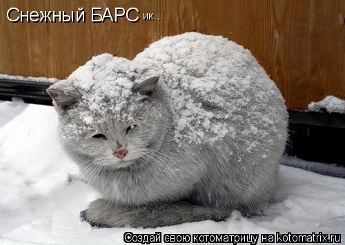 Котоматрица: Снежный БАРС ик...