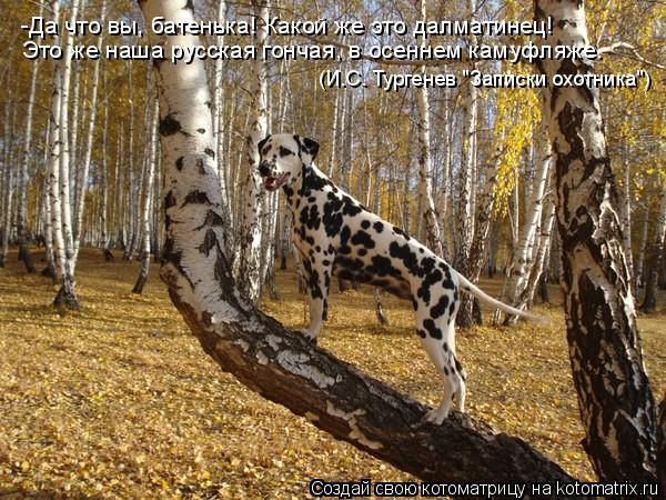 """Котоматрица: -Да что вы, батенька! Какой же это далматинец! (И.С. Тургенев """"Записки охотника"""") Это же наша русская гончая, в осеннем камуфляже."""