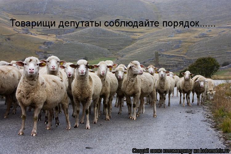 Котоматрица: Товарищи депутаты соблюдайте порядок......