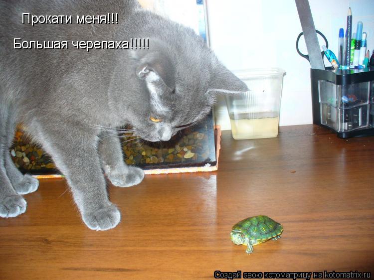Котоматрица: Прокати меня!!! Большая черепаха!!!!!