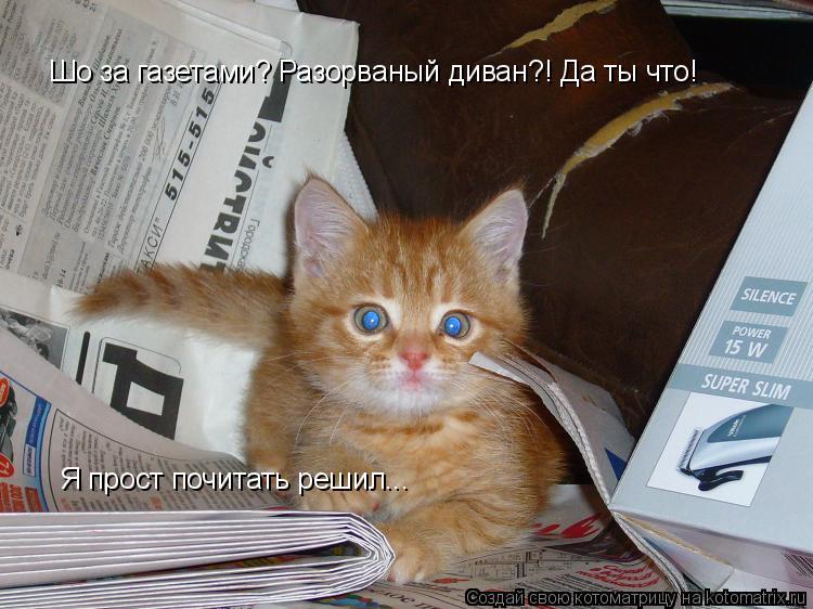 Котоматрица: Шо за газетами? Разорваный диван?! Да ты что! Я прост почитать решил...