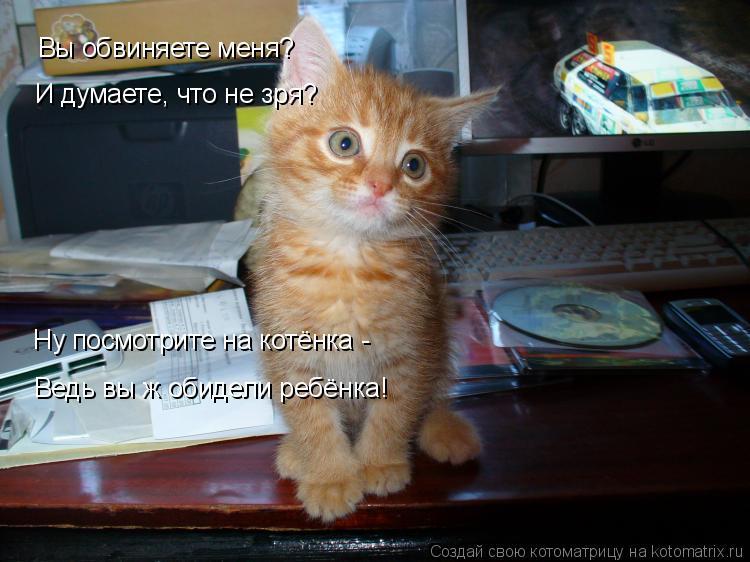Котоматрица: Вы обвиняете меня? И думаете, что не зря? Ну посмотрите на котёнка - Ведь вы ж обидели ребёнка!