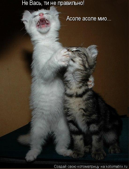 Котоматрица: Не Вась, ти не правильно! Асоле асоле мио...
