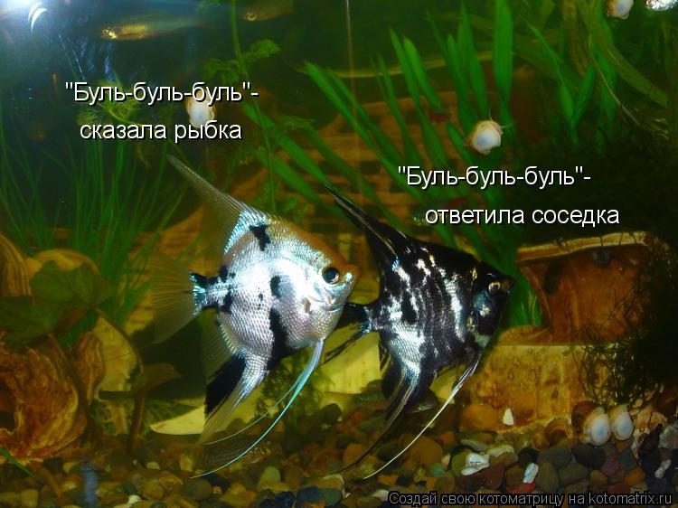 """Котоматрица: """"Буль-буль-буль""""- сказала рыбка """"Буль-буль-буль""""- ответила соседка"""