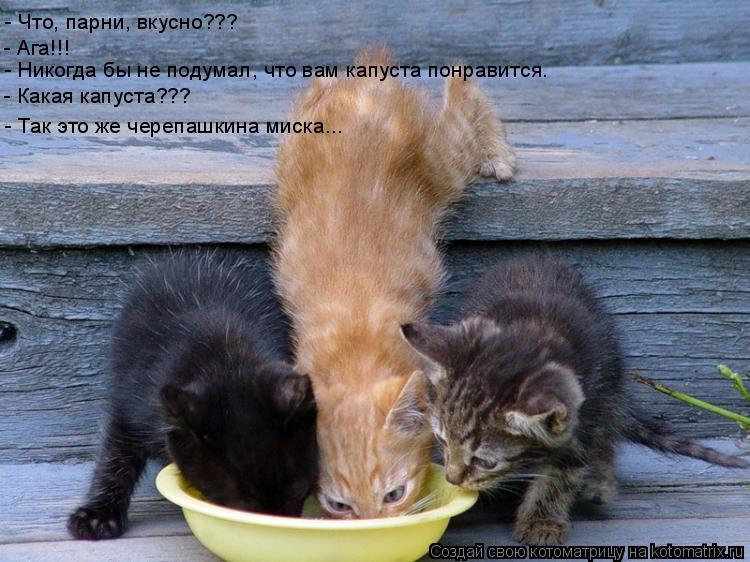 Котоматрица: - Что, парни, вкусно??? - Ага!!! - Никогда бы не подумал, что вам капуста понравится. - Какая капуста??? - Так это же черепашкина миска...
