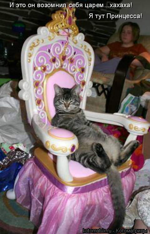 Котоматрица: И это он возомнил себя царем...хахаха!  Я тут Принцесса!