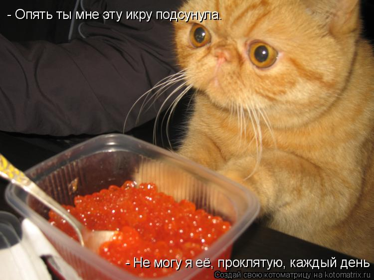 Котоматрица: - Опять ты мне эту икру подсунула. - Не могу я её, проклятую, каждый день есть.