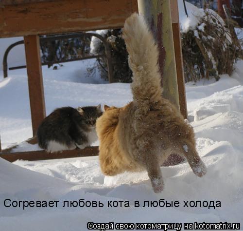 Котоматрица: Согревает любовь кота в любые холода