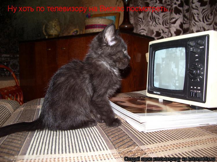 Котоматрица: Ну хоть по телевизору на Вискас посмотреть...