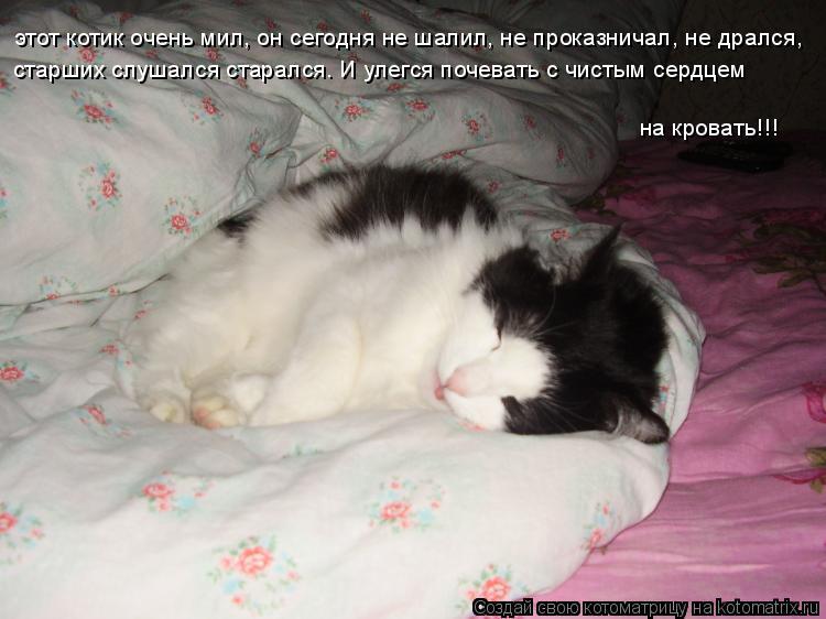 Котоматрица: этот котик очень мил, он сегодня не шалил, не проказничал, не дрался,  старших слушался старался. И улегся почевать с чистым сердцем  на крова