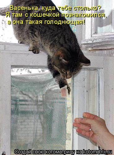Котоматрица: Васенька, куда тебе столько? Я там с кошечкой познакомился,  а она такая голоднющая!