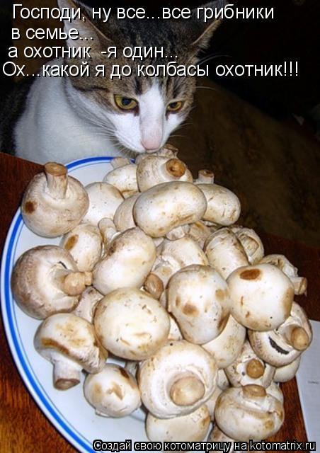 Котоматрица: Господи, ну все...все грибники в семье... а охотник  -я один... Ох...какой я до колбасы охотник!!!