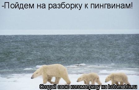 Котоматрица: -Пойдем на разборку к пингвинам!