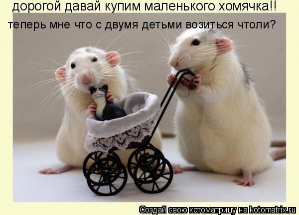 Котоматрица: дорогой давай купим маленького хомячка!! теперь мне что с двумя детьми возиться чтоли?