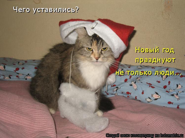 Котоматрица: Чего уставились? Новый год празднуют не только люди...