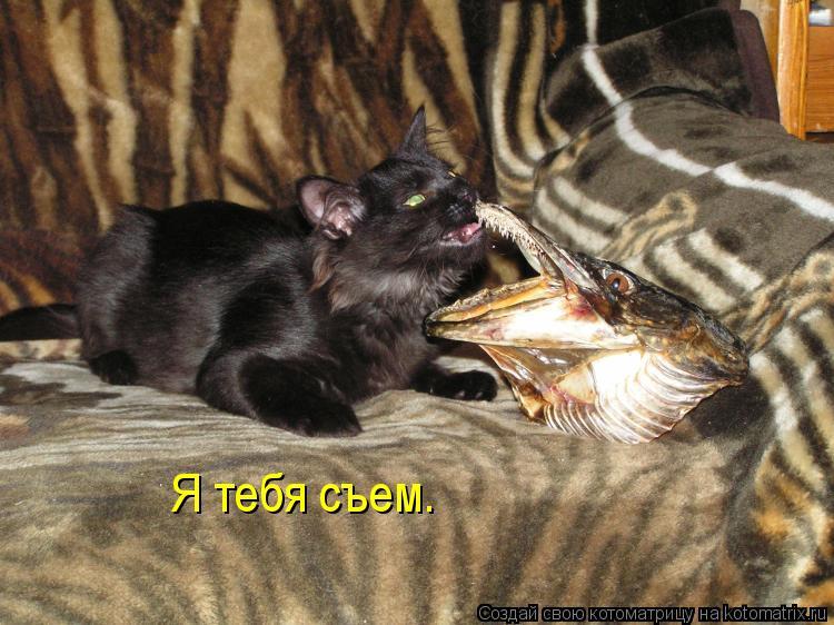 Котоматрица: Я тебя съем.