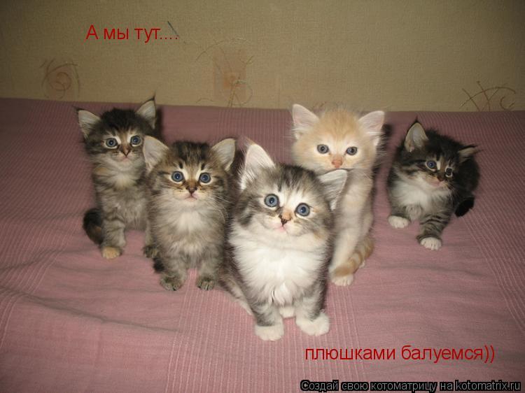 Котоматрица: А мы тут.... плюшками балуемся))