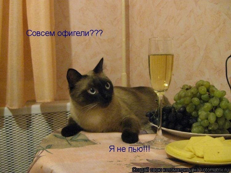 Котоматрица: Совсем офигели??? Я не пью!!!