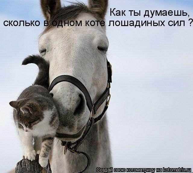 Котоматрица: Как ты думаешь,  сколько в одном коте лошадиных сил ?