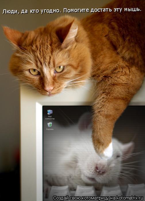 Котоматрица: Люди, да кто угодно. Помогите достать эту мышь.
