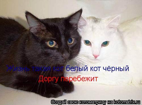 Котоматрица: Жизнь такая кот белый кот чёрный Жизнь такая кот белый кот чёрный Доргу перебежит