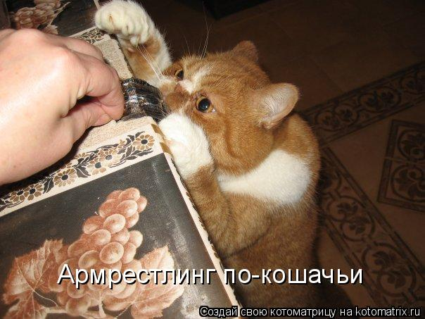 Котоматрица: Армрестлинг по-кошачьи