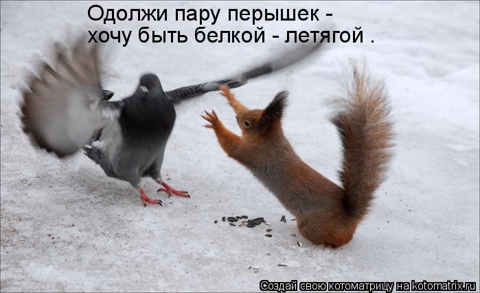 Котоматрица: Одолжи пару перышек - хочу быть белкой - летягой .