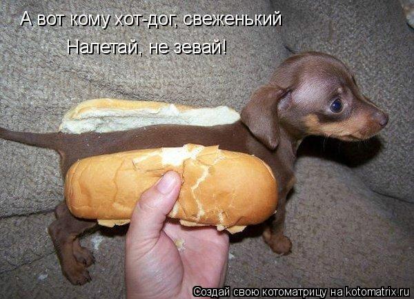 Котоматрица: А вот кому хот-дог, свеженький Налетай, не зевай!