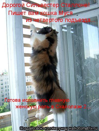 Котоматрица: Дорогой Сильвестер Сталлоне! Пишет вам кошка Муся из четвертого подъезда... Готова исполнить главную женскую роль в Скалолазе 2...