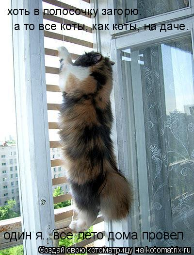 Котоматрица: хоть в полосочку загорю.  один я...все лето дома провел  а то все коты, как коты, на даче.