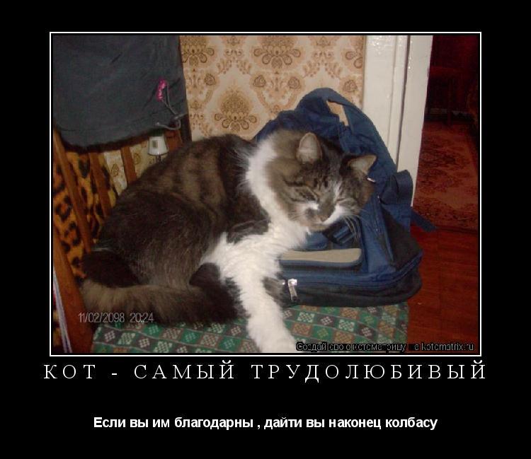 Котоматрица: Кот - самый трудолюбивый Если вы им благодарны , дайти вы наконец колбасу