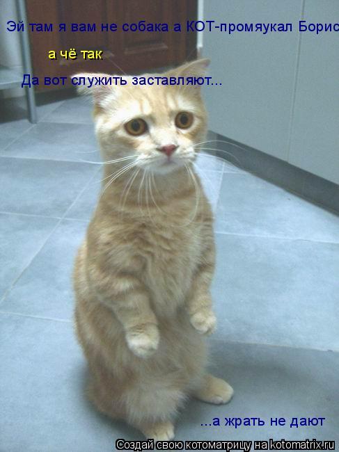 Котоматрица: Эй там я вам не собака а КОТ-промяукал Борис а чё так Да вот служить заставляют... ...а жрать не дают