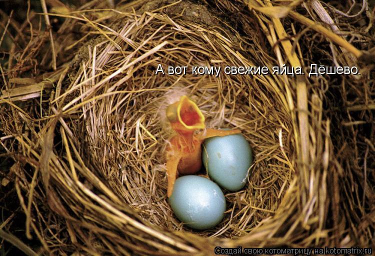 Котоматрица: А вот кому свежие яйца. Дёшево.
