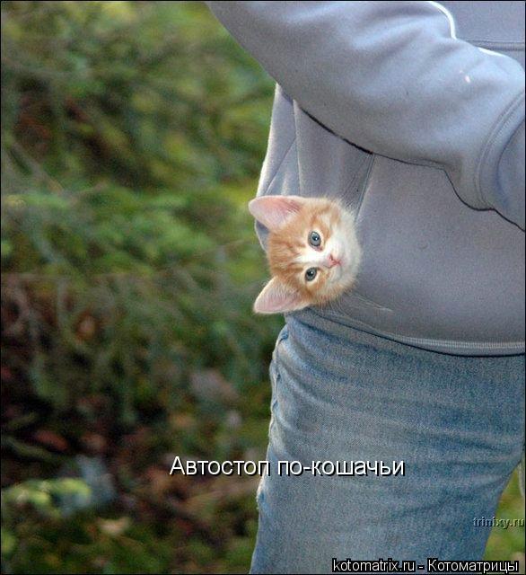 Котоматрица: Автостоп по-кошачьи