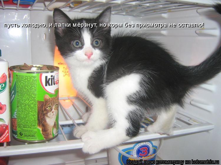 Котоматрица: пусть холодно, и лапки мёрзнут, но корм без присмотра не оставлю!