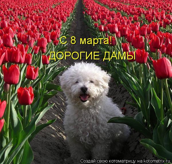 Котоматрица: С 8 марта! ДОРОГИЕ ДАМЫ