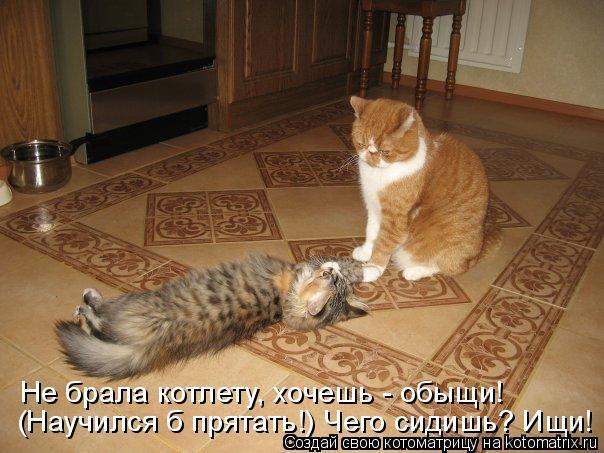 Котоматрица: Не брала котлету, хочешь - обыщи! (Научился б прятать!) Чего сидишь? Ищи!