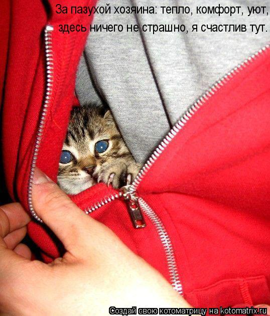 Котоматрица: За пазухой хозяина: тепло, комфорт, уют, здесь ничего не страшно, я счастлив тут.