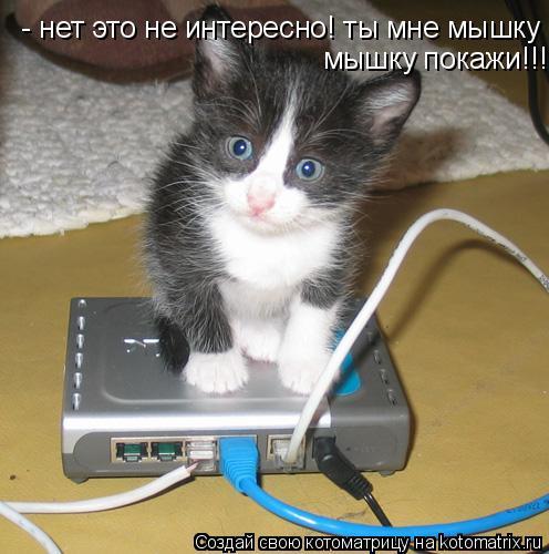Котоматрица: - нет это не интересно! ты мне мышку  мышку покажи!!!