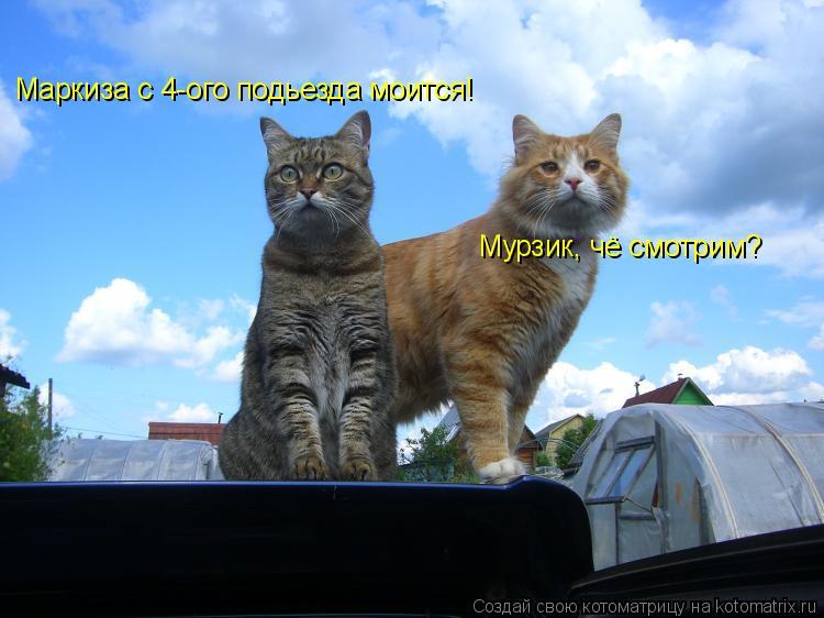 Котоматрица: Мурзик, чё смотрим? Маркиза с 4-ого подьезда моится!