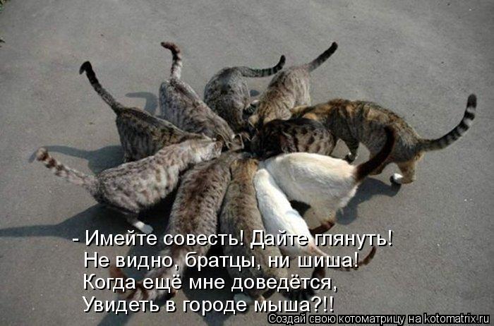 Котоматрица: - Имейте совесть! Дайте глянуть! Не видно, братцы, ни шиша! Когда ещё мне доведётся, Увидеть в городе мыша?!!