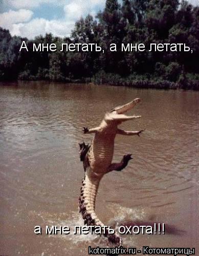 Котоматрица: а мне летать охота!!!  А мне летать, а мне летать,
