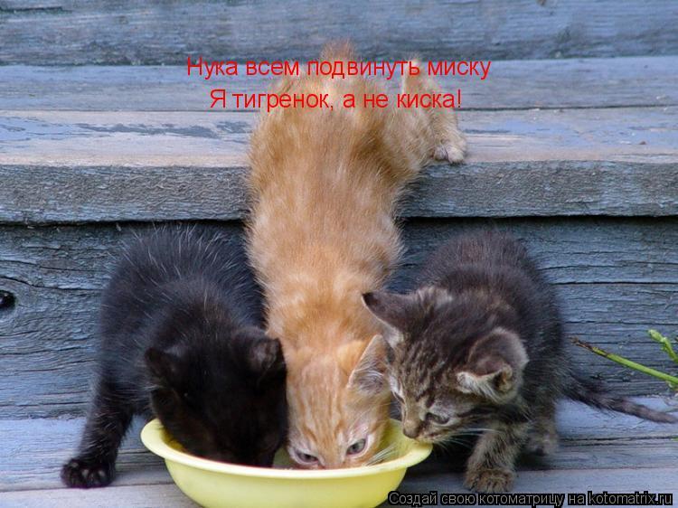 Котоматрица: Нука всем подвенуть миску! Нука всем подвинуть миску Я тигренок, а не киска!